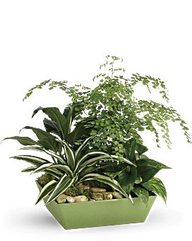 Forever Green Plant Garden | Mixed Bouquets | Same Day Flower Delivery | Teleflora