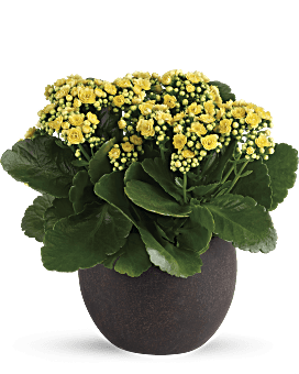 Forever Yellow Kalanchoes | Mixed Bouquets | Same Day Flower Delivery | Teleflora