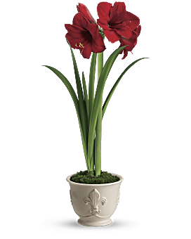 Merry Amaryllis   Mixed Bouquets   Same Day Flower Delivery   Red   Teleflora