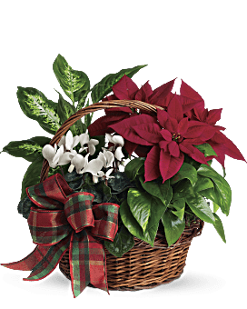 Mini Table Top Christmas Tree Douglas Fir Arrangement With White Asiatic Lilies & Red Spray Roses By Teleflora