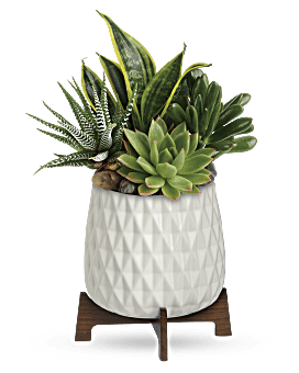Modern Mood Succulent Garden | Mixed Bouquets | Same Day Flower Delivery | White | Teleflora