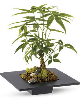 Money Tree | Mixed Bouquets | Same Day Flower Delivery | White | Teleflora
