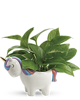 Peaceful Unicorn Pothos Plant   Mixed Bouquets   Same Day Flower Delivery   Green   Teleflora
