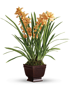 Regally Yours Orchid   Orchids   Same Day Flower Delivery   Orange   Teleflora