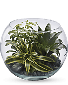 Sphere Of Tranquility Terrarium | Mixed Bouquets | Same Day Flower Delivery | Green | Teleflora