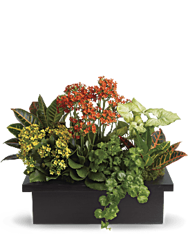 Stylish Plant Assortment | Mixed Bouquets | Same Day Flower Delivery | Multi-Colored | Teleflora