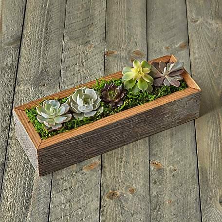 Succulent Garden DIY Kit